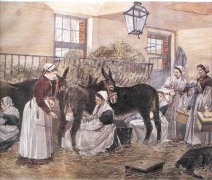 Feeding at the teat of a mule